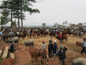 Thanh Luong Cattle Market-3