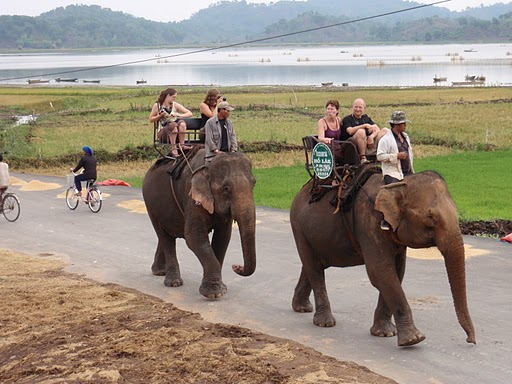 Elephant riding in Vietnam