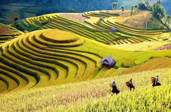 Tourism week commences in Mu Cang Chai