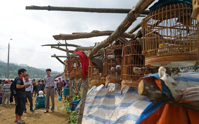 The bird market in Lao Cai