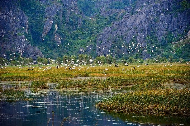 In the dry season, Van Long is the winter place of migratory birds from the North