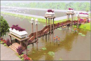 A radiant bridge in Tra Su cajuput forest.